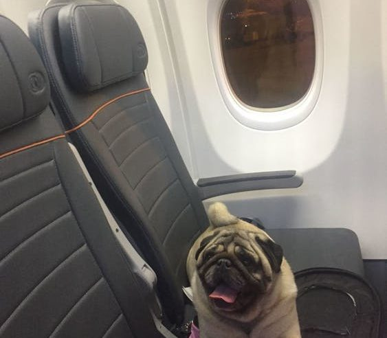 5 Travel Tips to Remember If You're a Plane Passenger with Animal Allergies