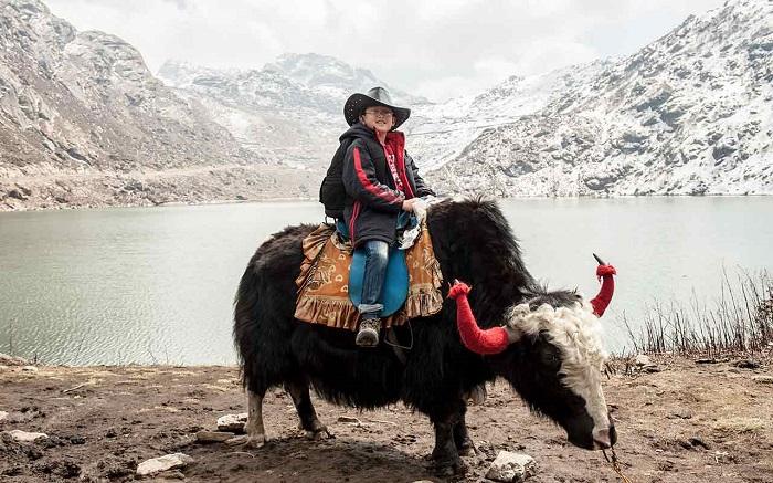 Sikim Yak Safari
